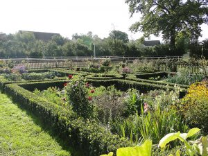 Bauerngarten mit Eiche
